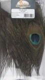 Oeil de Paon Jmc - 10 yeux