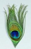 Oeil de Paon Naturel JMC